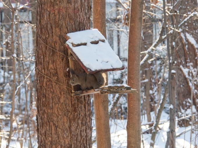 マイナス17℃、霧氷の木々をエゾリス君が駆け回ります。_f0276498_12570725.jpg