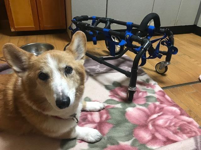 四輪車椅子_f0242002_19271958.jpg