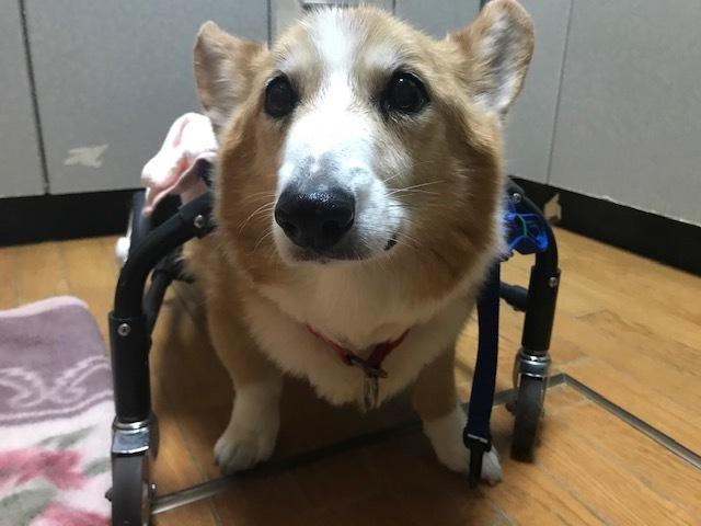 四輪車椅子_f0242002_19274187.jpg