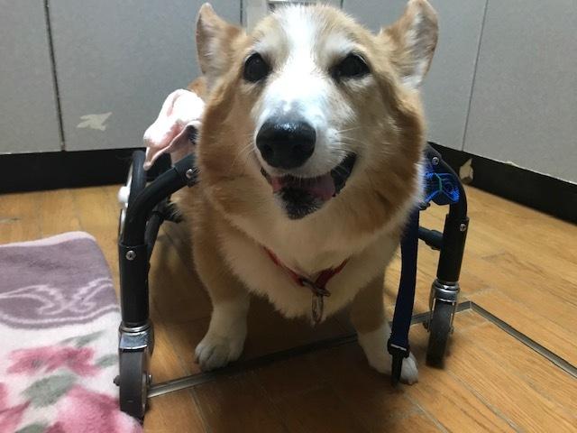 四輪車椅子_f0242002_19275538.jpg