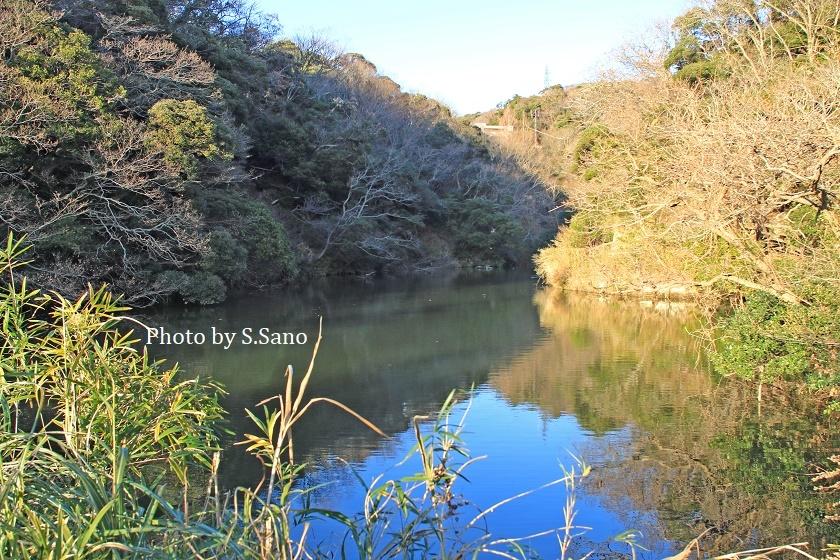 横浜・鎌倉・逗子の里山(2019年12月)_b0348205_11284965.jpg