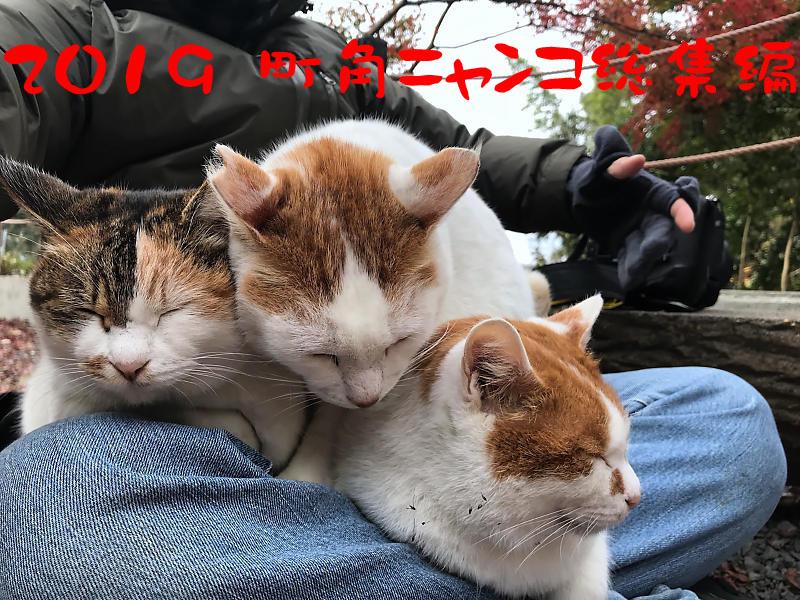 2019 町角ニャンコ総集編_f0032011_19020863.jpg