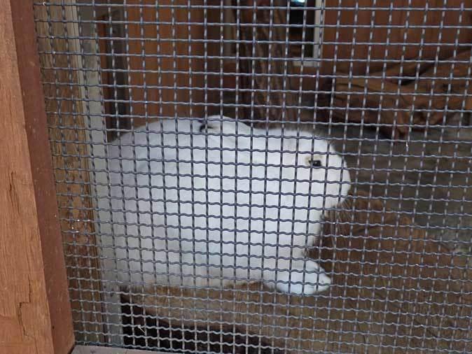 1月の多摩~ボルネオランウータンの赤ちゃん「ロキ」と冬の動物たち_b0355317_20240558.jpg