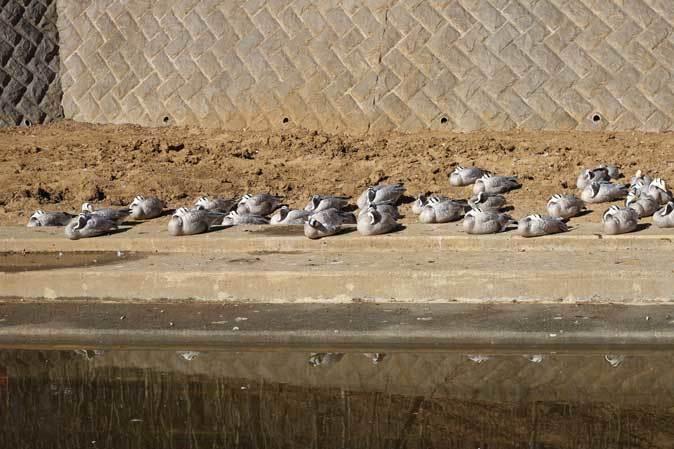 1月の多摩~ボルネオランウータンの赤ちゃん「ロキ」と冬の動物たち_b0355317_20332733.jpg