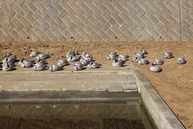 1月の多摩~ボルネオランウータンの赤ちゃん「ロキ」と冬の動物たち_b0355317_20342067.jpg