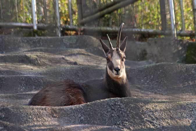1月の多摩~ボルネオランウータンの赤ちゃん「ロキ」と冬の動物たち_b0355317_20344720.jpg