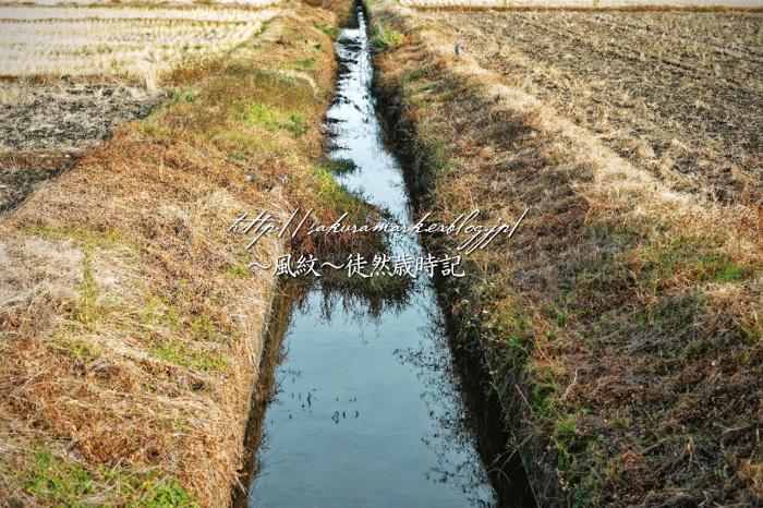 褐色の用水路。_f0235723_22311776.jpg
