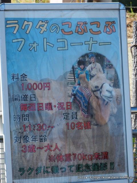 東武でラクダ納め_c0188824_21584974.jpg