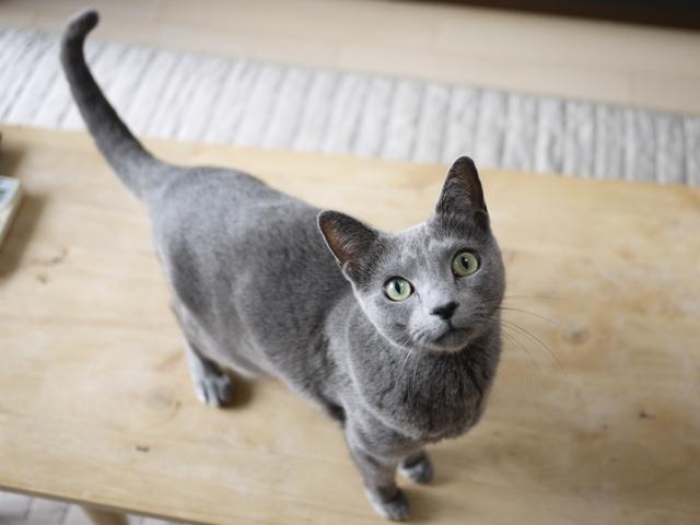 猫のお留守番 ルウちゃん編。_a0143140_23220305.jpg