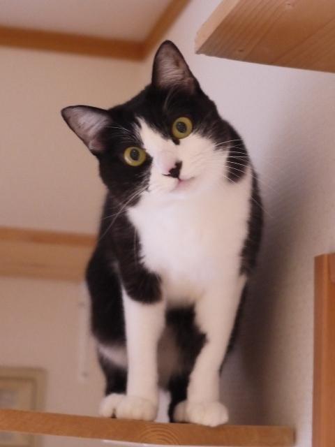 猫のお留守番 ぶぶちゃん編。_a0143140_23363904.jpg