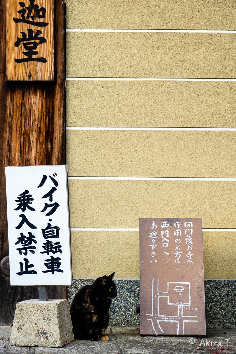 釈迦堂のニャンコ..._f0152550_18595869.jpg