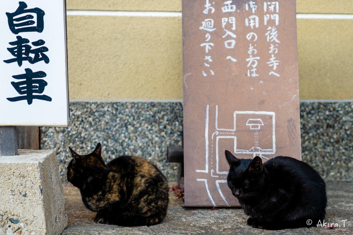 釈迦堂のニャンコ..._f0152550_19003304.jpg