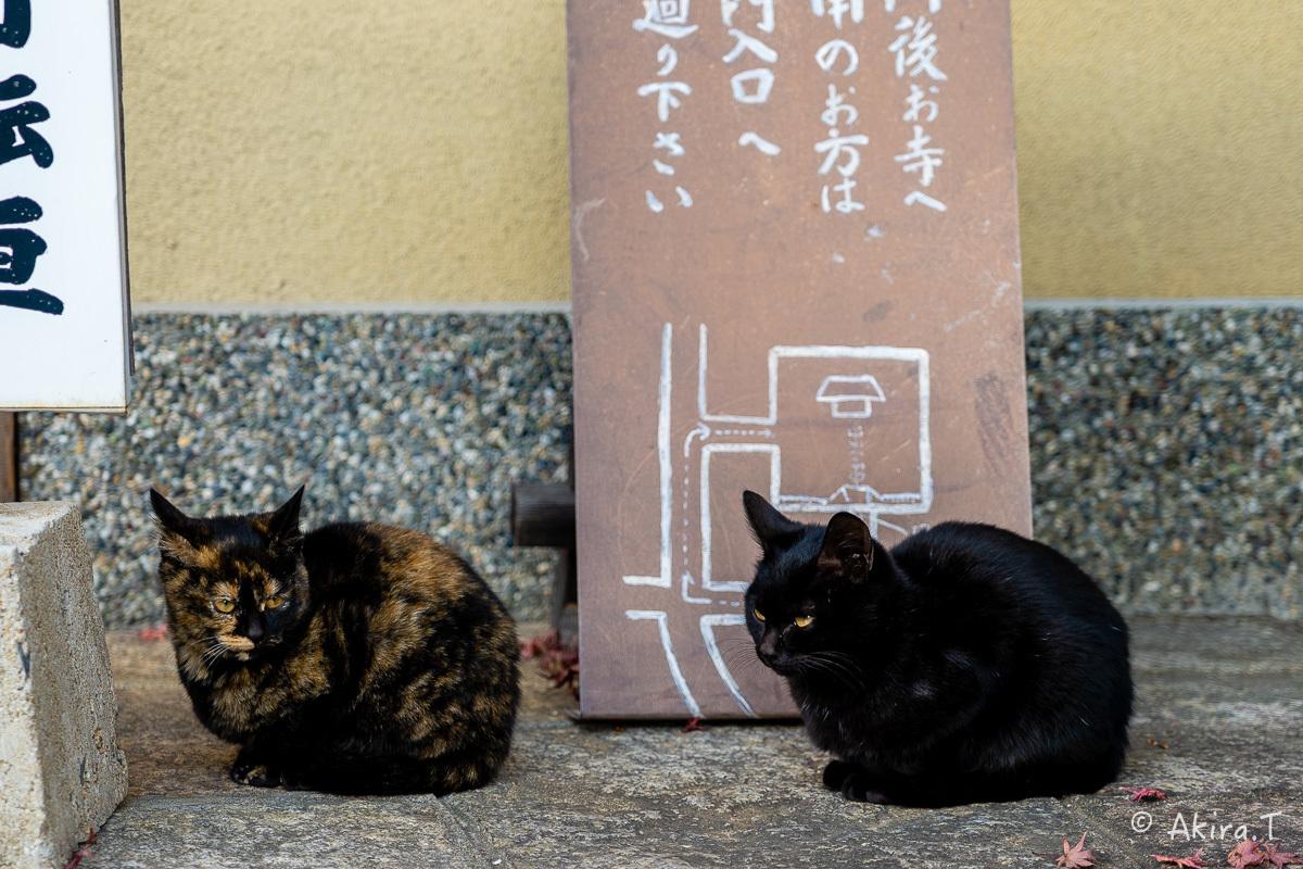 釈迦堂のニャンコ..._f0152550_19005121.jpg