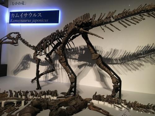 カムイサウルス~わくわく^^恐竜博'19_e0326953_12152548.jpg