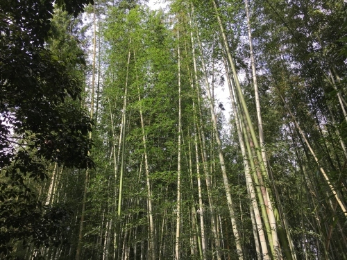 京都の旅\'19Ⅵ 京都秋の旅 その2_e0326953_20132123.jpg