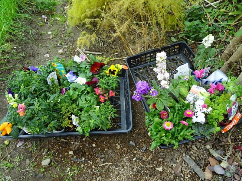我が家の花壇に 花苗を植え付け_c0108460_17505886.jpg