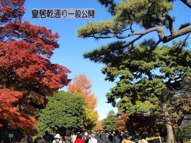 <2020年元日>令和初のお正月を迎えて新年ご挨拶(新たなる日本の未来に向けて)_c0119160_12094126.jpg