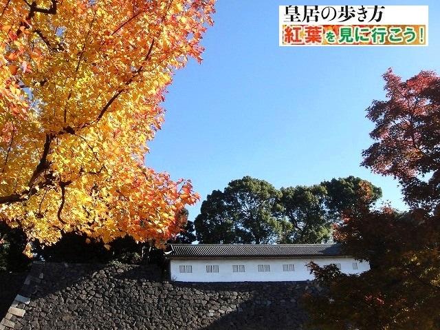<2020年元日>令和初のお正月を迎えて新年ご挨拶(新たなる日本の未来に向けて)_c0119160_12123686.jpg