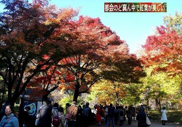 <2020年元日>令和初のお正月を迎えて新年ご挨拶(新たなる日本の未来に向けて)_c0119160_19193477.jpg
