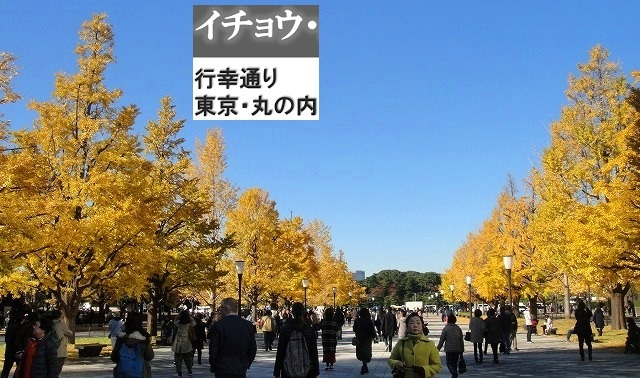 <2020年元日>令和初のお正月を迎えて新年ご挨拶(新たなる日本の未来に向けて)_c0119160_19345447.jpg