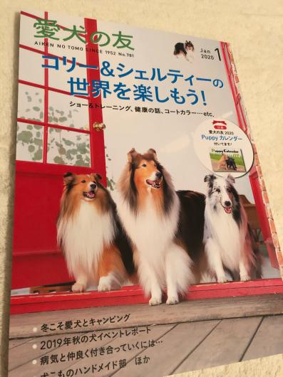 愛犬の友、コリーシェルティ特集_f0126965_14572567.jpg
