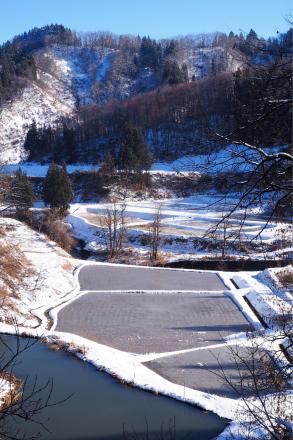 初冬の棚田_a0025576_11103525.jpg
