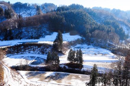 初冬の棚田_a0025576_11104168.jpg