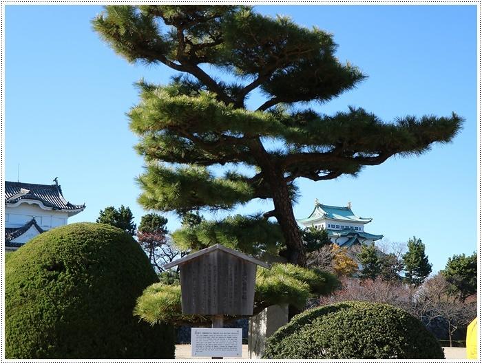 愛知県(名古屋周辺)でのお出かけ その6 毎回定番のコース名古屋城 (11月29日)_b0175688_00015117.jpg