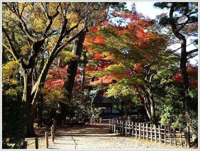 愛知県(名古屋周辺)でのお出かけ その6 毎回定番のコース名古屋城 (11月29日)_b0175688_00094363.jpg