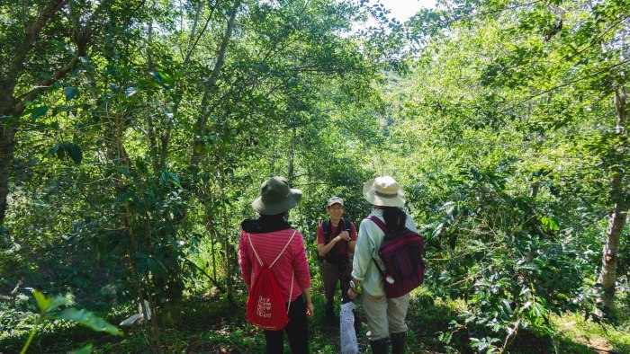 コーヒーの森で野鳥観察ワークショップ開催_b0128901_14144945.jpg
