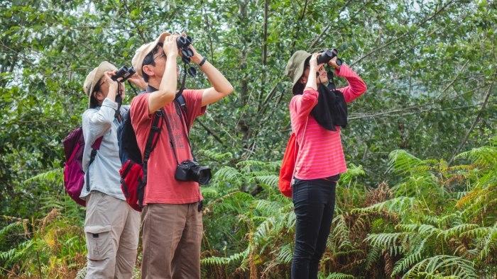 コーヒーの森で野鳥観察ワークショップ開催_b0128901_14145093.jpg