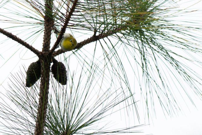 コーヒーの森で野鳥観察ワークショップ開催_b0128901_14172317.jpg