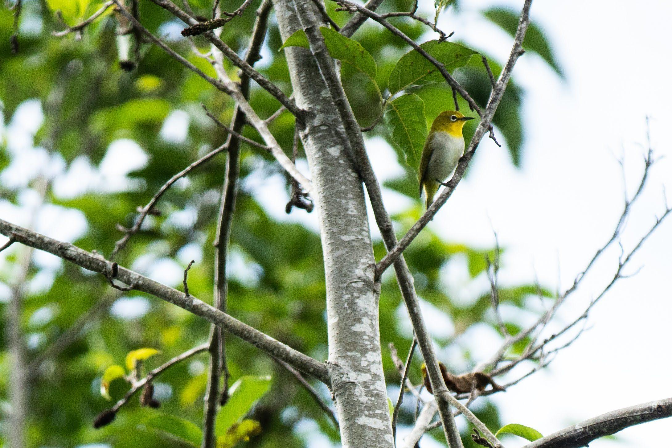 コーヒーの森で野鳥観察ワークショップ開催_b0128901_14275071.jpg