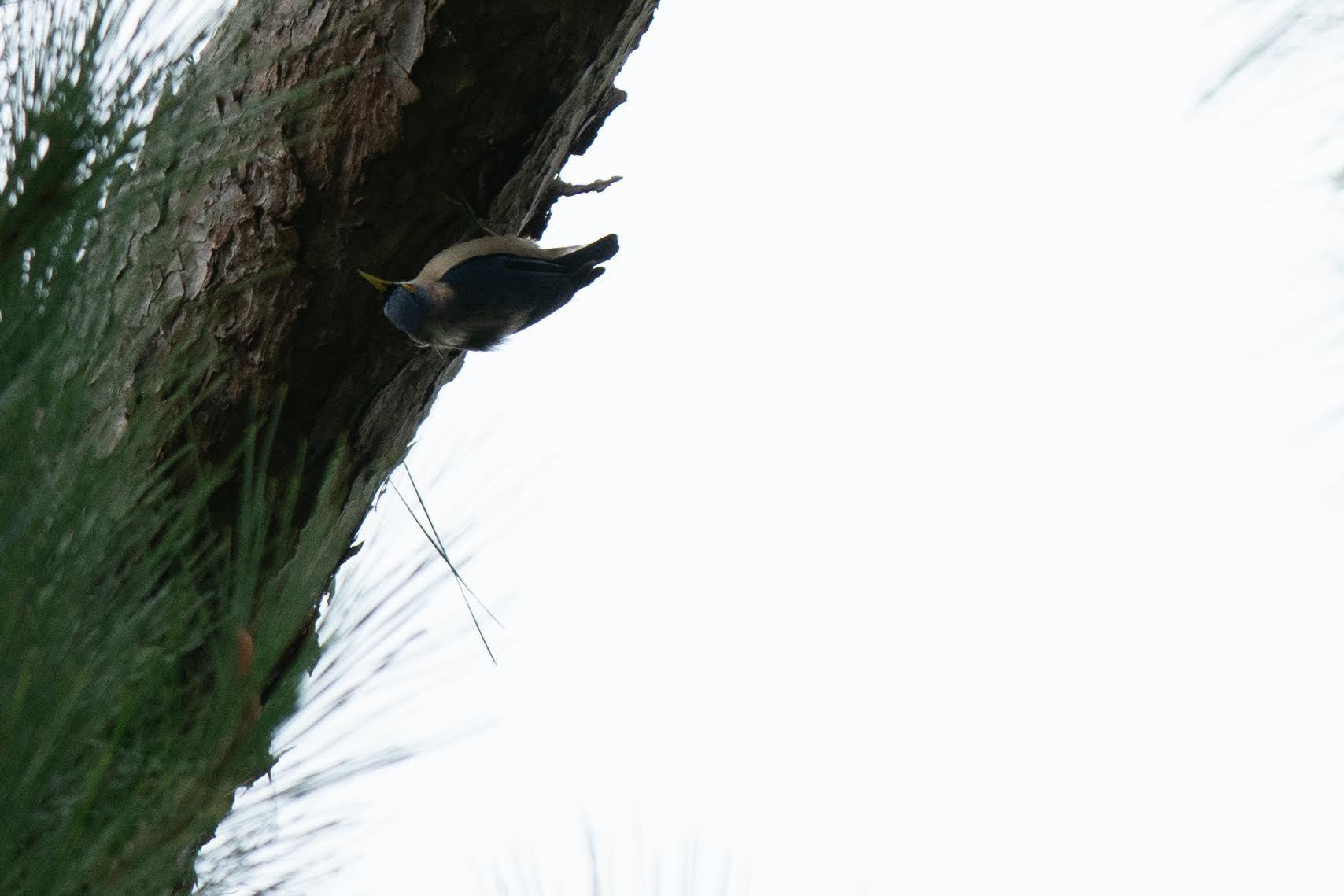 コーヒーの森で野鳥観察ワークショップ開催_b0128901_14275085.jpg