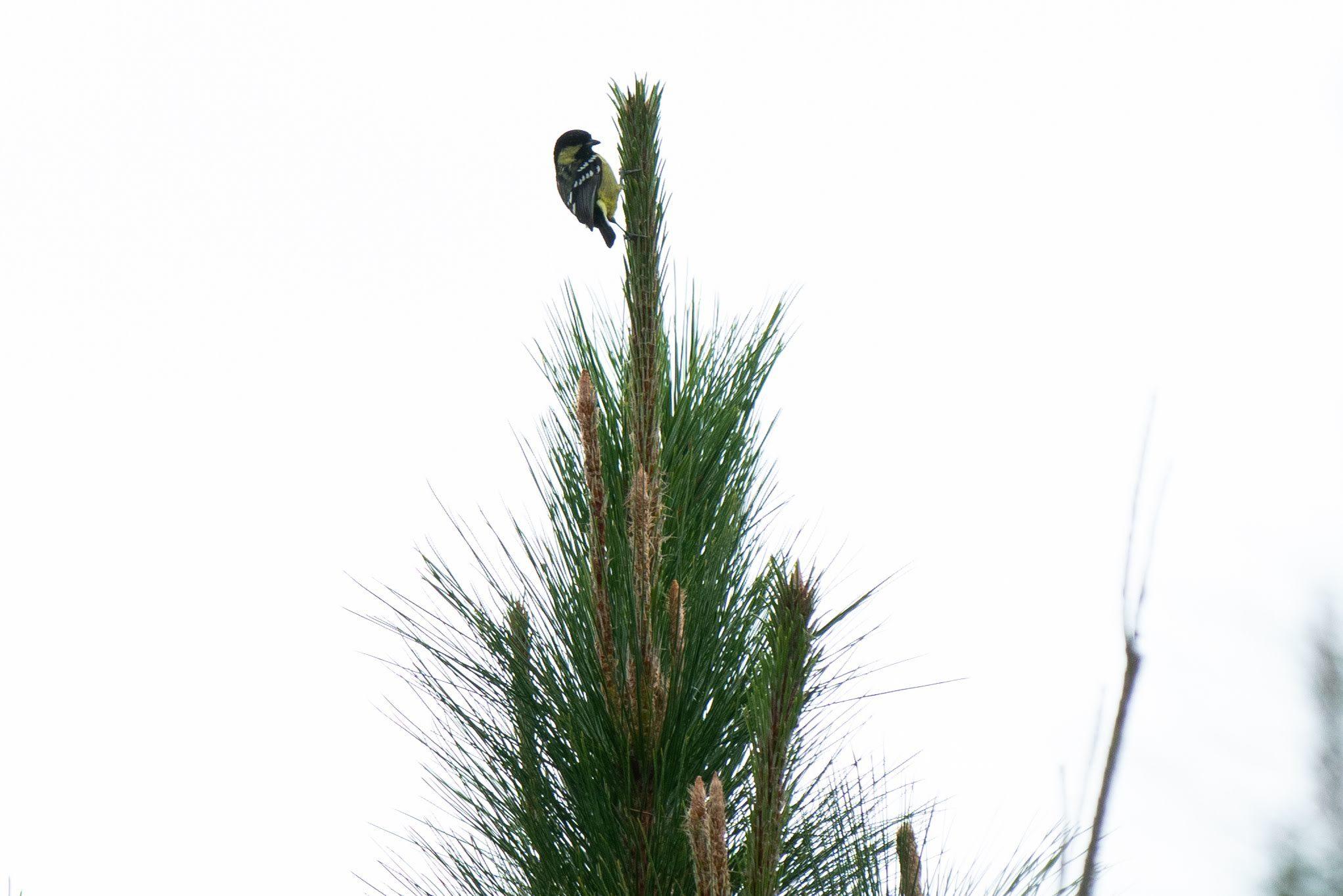 コーヒーの森で野鳥観察ワークショップ開催_b0128901_14275136.jpg