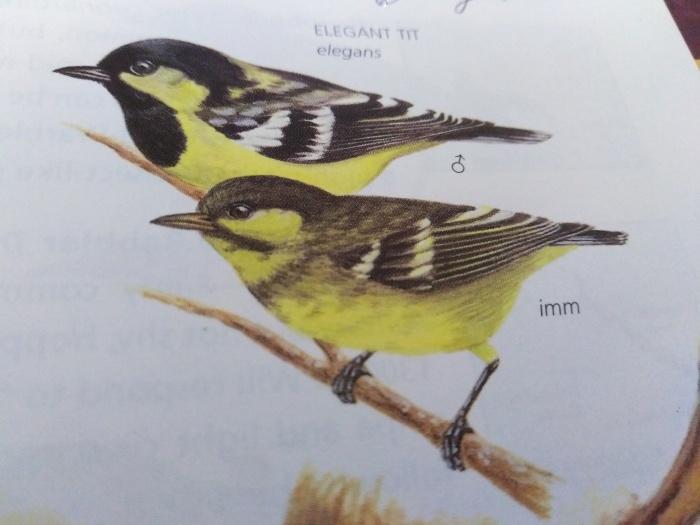 コーヒーの森で野鳥観察ワークショップ開催_b0128901_14345719.jpg