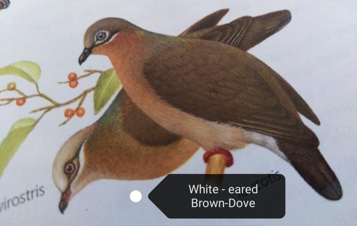 コーヒーの森で野鳥観察ワークショップ開催_b0128901_14345798.jpg