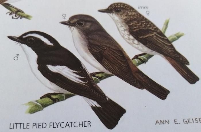 コーヒーの森で野鳥観察ワークショップ開催_b0128901_14345829.jpg