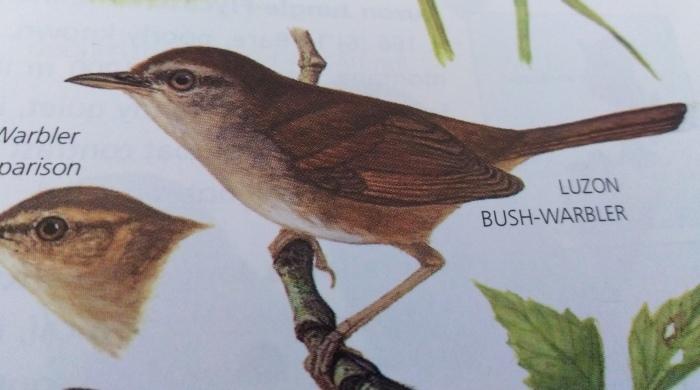 コーヒーの森で野鳥観察ワークショップ開催_b0128901_14363524.jpg
