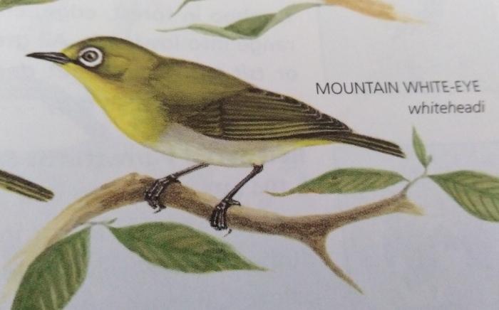 コーヒーの森で野鳥観察ワークショップ開催_b0128901_14363645.jpg
