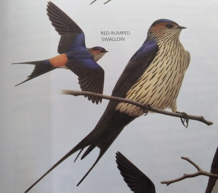 コーヒーの森で野鳥観察ワークショップ開催_b0128901_14363753.jpg