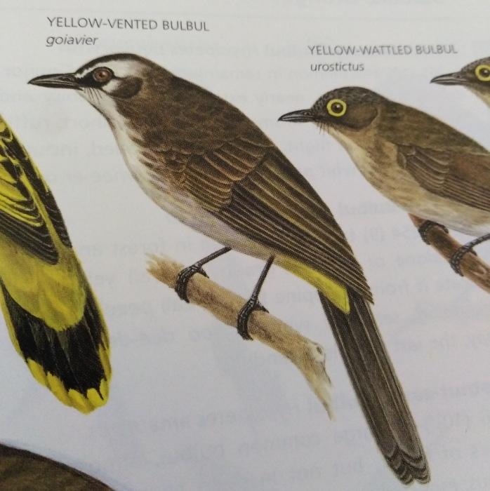コーヒーの森で野鳥観察ワークショップ開催_b0128901_14363852.jpg