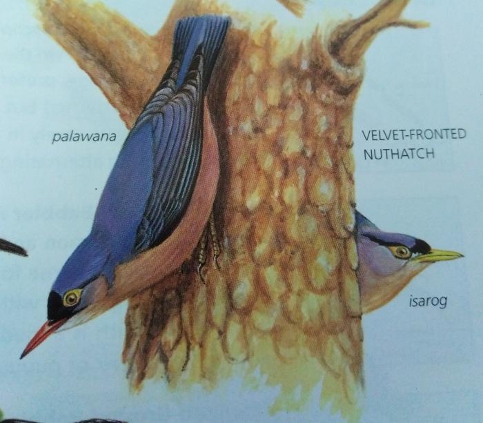 コーヒーの森で野鳥観察ワークショップ開催_b0128901_14363857.jpg