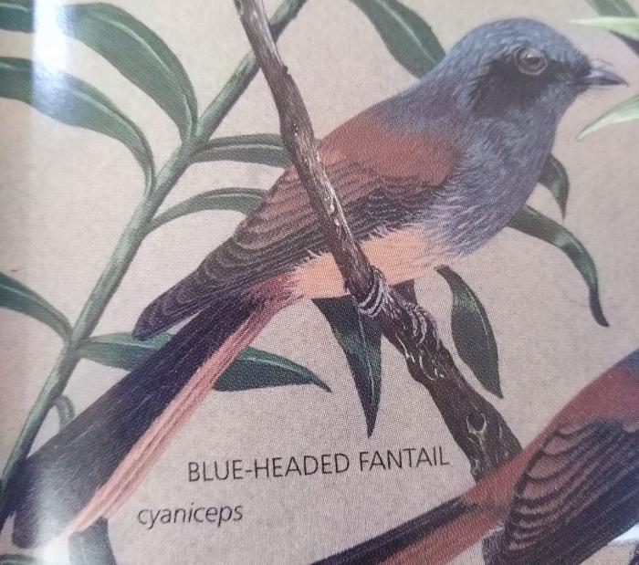 コーヒーの森で野鳥観察ワークショップ開催_b0128901_16014405.jpg