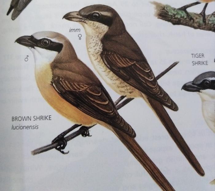コーヒーの森で野鳥観察ワークショップ開催_b0128901_16014563.jpg