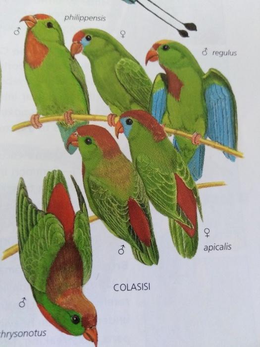 コーヒーの森で野鳥観察ワークショップ開催_b0128901_16014599.jpg