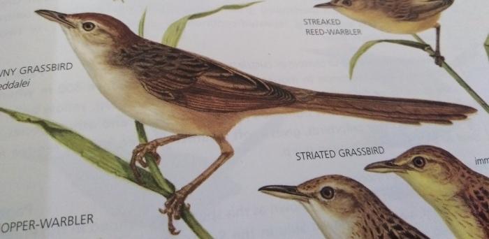 コーヒーの森で野鳥観察ワークショップ開催_b0128901_16014758.jpg
