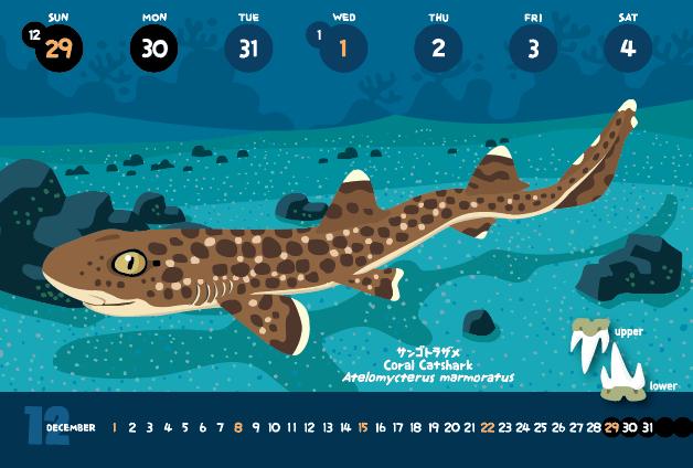 サンゴトラザメ_f0292806_19480104.jpg