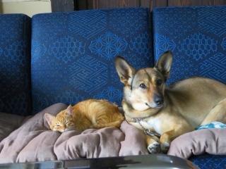孫と犬と猫_e0030924_11035057.jpg