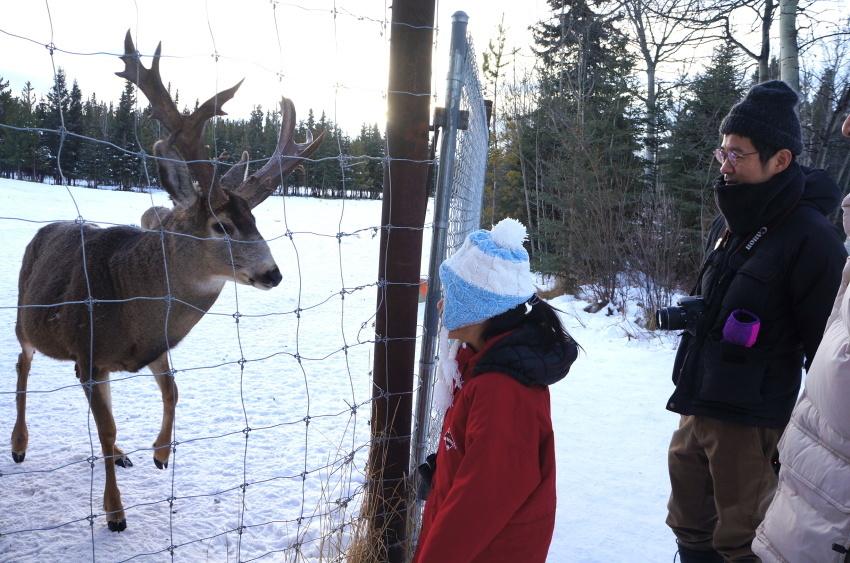 子供も大人も楽しめるユーコン動物保護区_d0112928_13504397.jpg